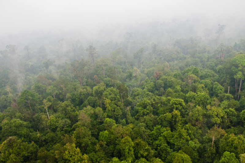 印尼過去森林大火造成得霾害景象。(Photo Credit: CIFOR@Flickr CC BY 2.0)