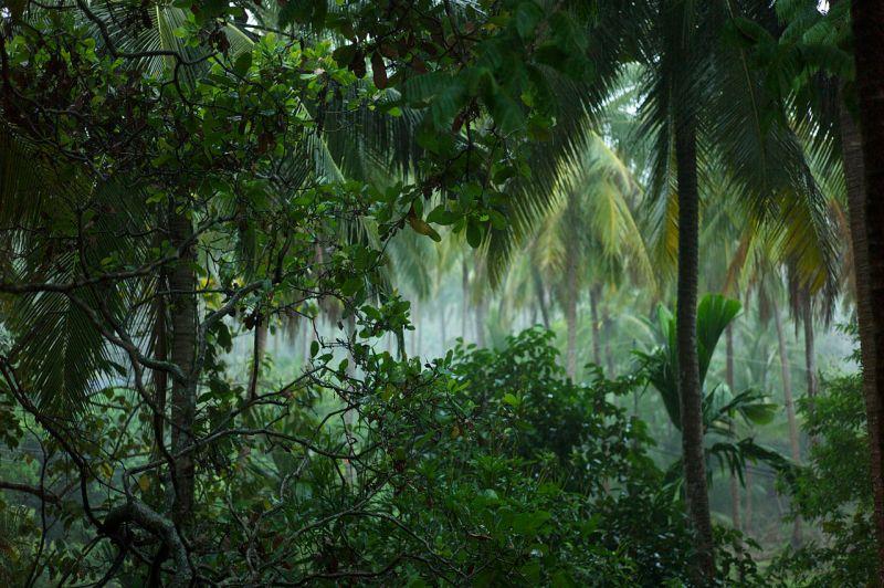 1280px-thai_rain_forest